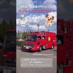 消防車・救急車のサイレンを聞くと犬が吠えるってホント?! Does your dog react to fire and ambulance sirens? #Shorts