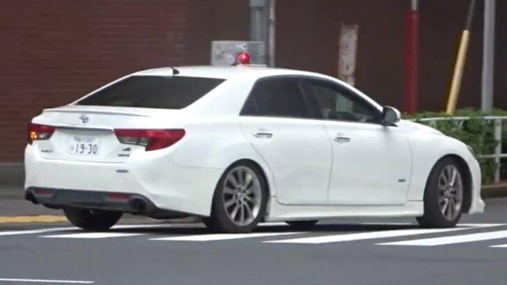 歩行者に注意しながら丁寧なマイクパフォーマンスで信号無視する車を緊急走行で追跡するマークX覆面パトカー 【交通違反取締り】