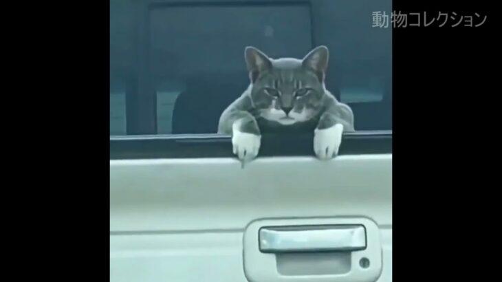 煽り運転を絶対に許さない猫